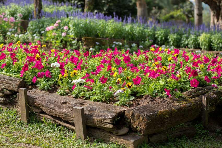 bordure per aiuole in legno con fiori colorati.