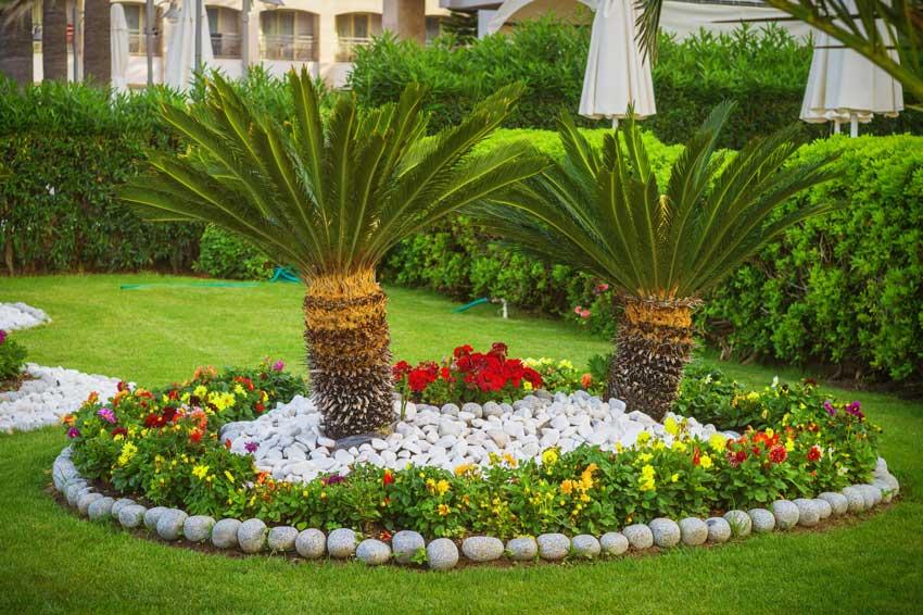 Bellissima aiuola con palme, fiori colorati e bordatura realizzata con sassi naturali.