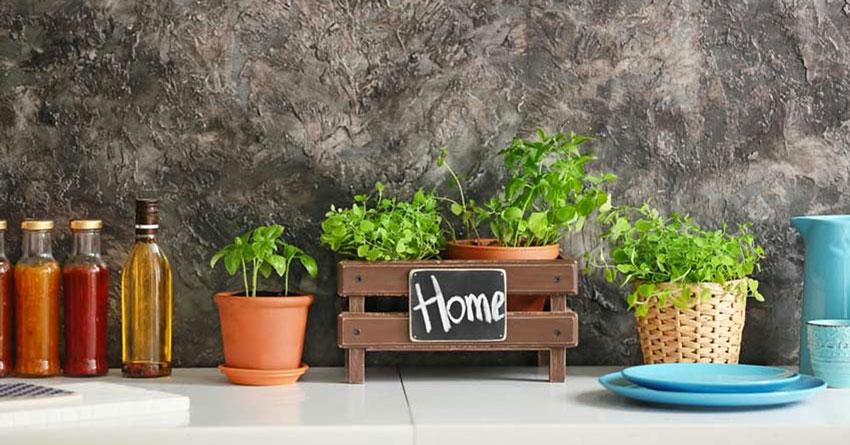 erbe aromatiche perenni da coltivare sul balcone o in casa.