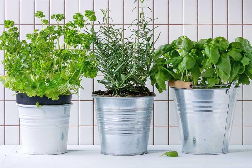 vasetti di piante aromatiche in cucina.