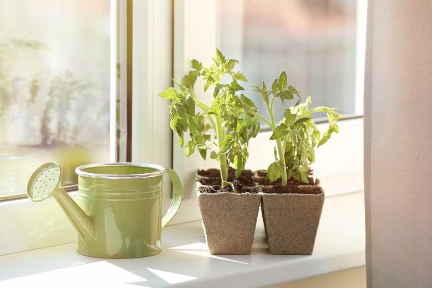 vasi di piante aromatiche vicino alla finestra.