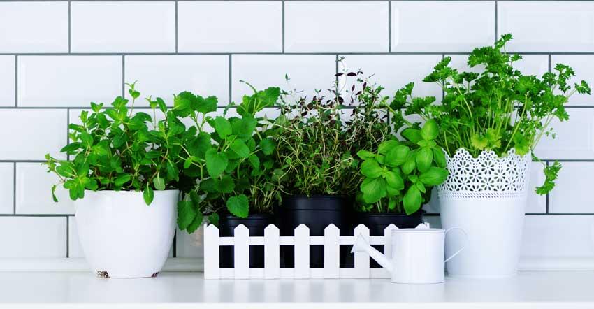 composizione di erbe aromatiche sul top della cucina.