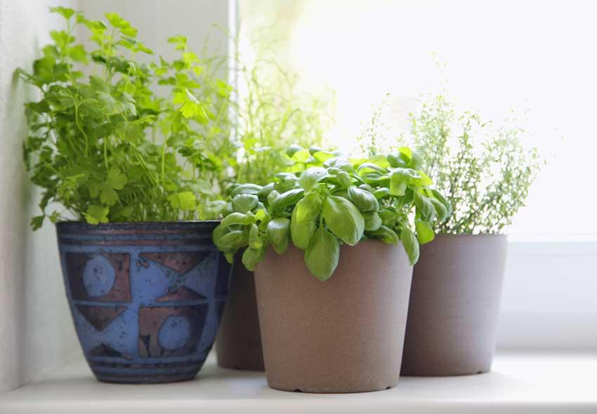 piante aromatiche in vaso appoggiate sul bordo di una finestra.