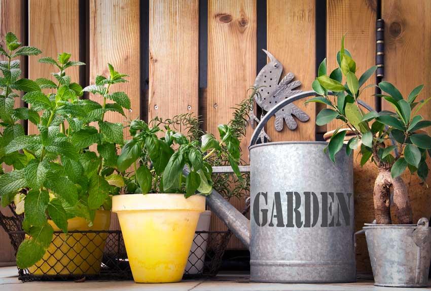 composizione di piante aromatiche in vaso.