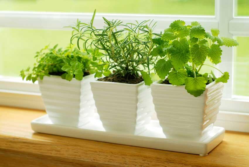 erbe aromatiche in un vaso bianco, ottimo anche per decorare casa.