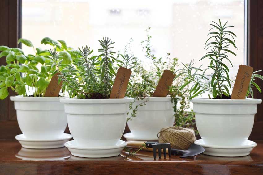 piante aromatiche in vaso.