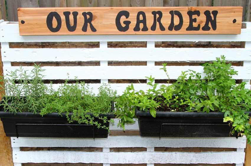 composizione di erbe aromatiche in un pallet di legno con scritta our garden.