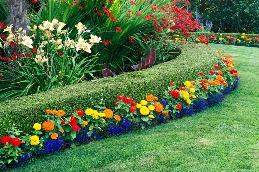 siepe decorativa con piante bosso e fiori colorati gialli, rossi e arancione.