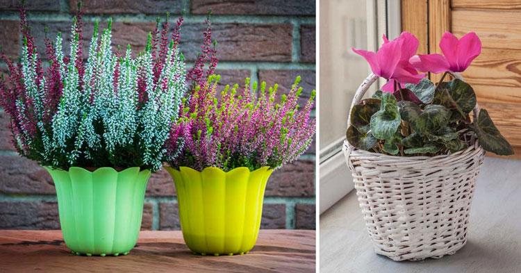 fiori da balcone, piante autunnali da terrazzo.
