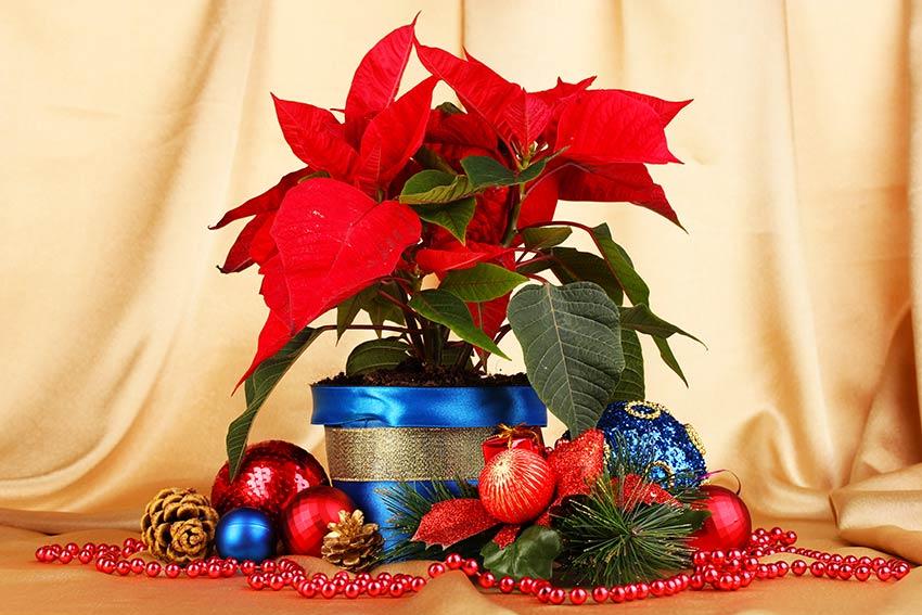 Bella decorazione natalizia con le piante.