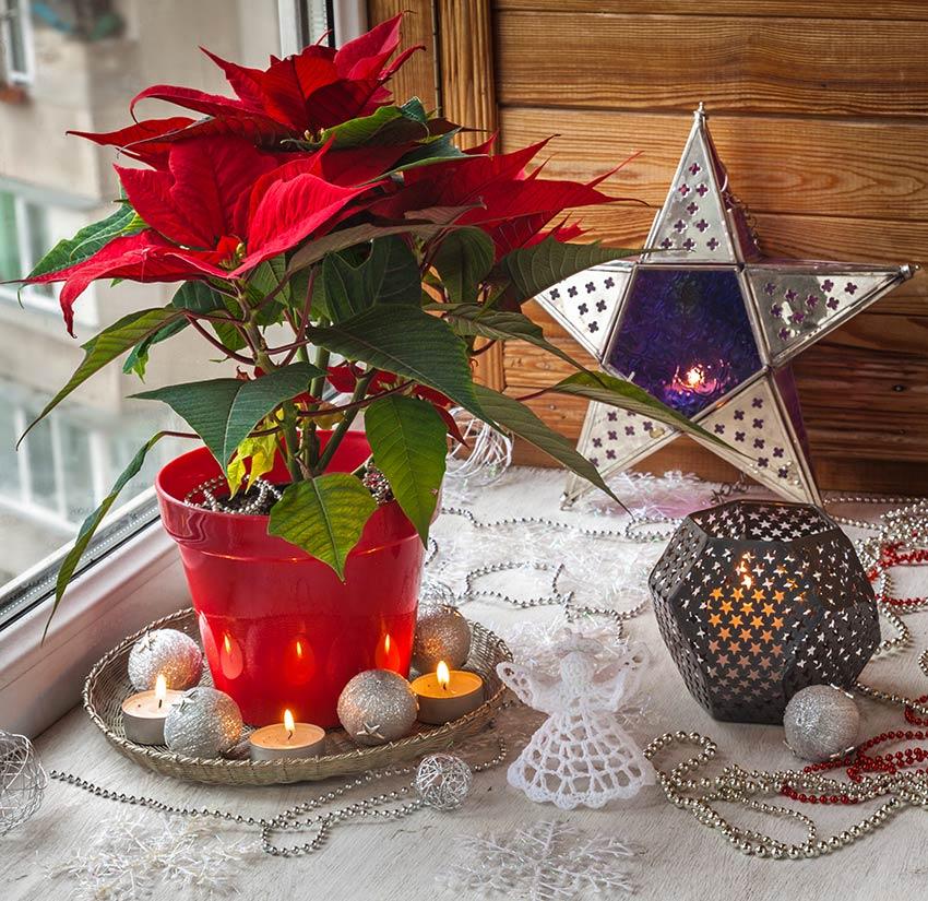 Pianta di Natale rossa con sottovaso decorato con delle candele.