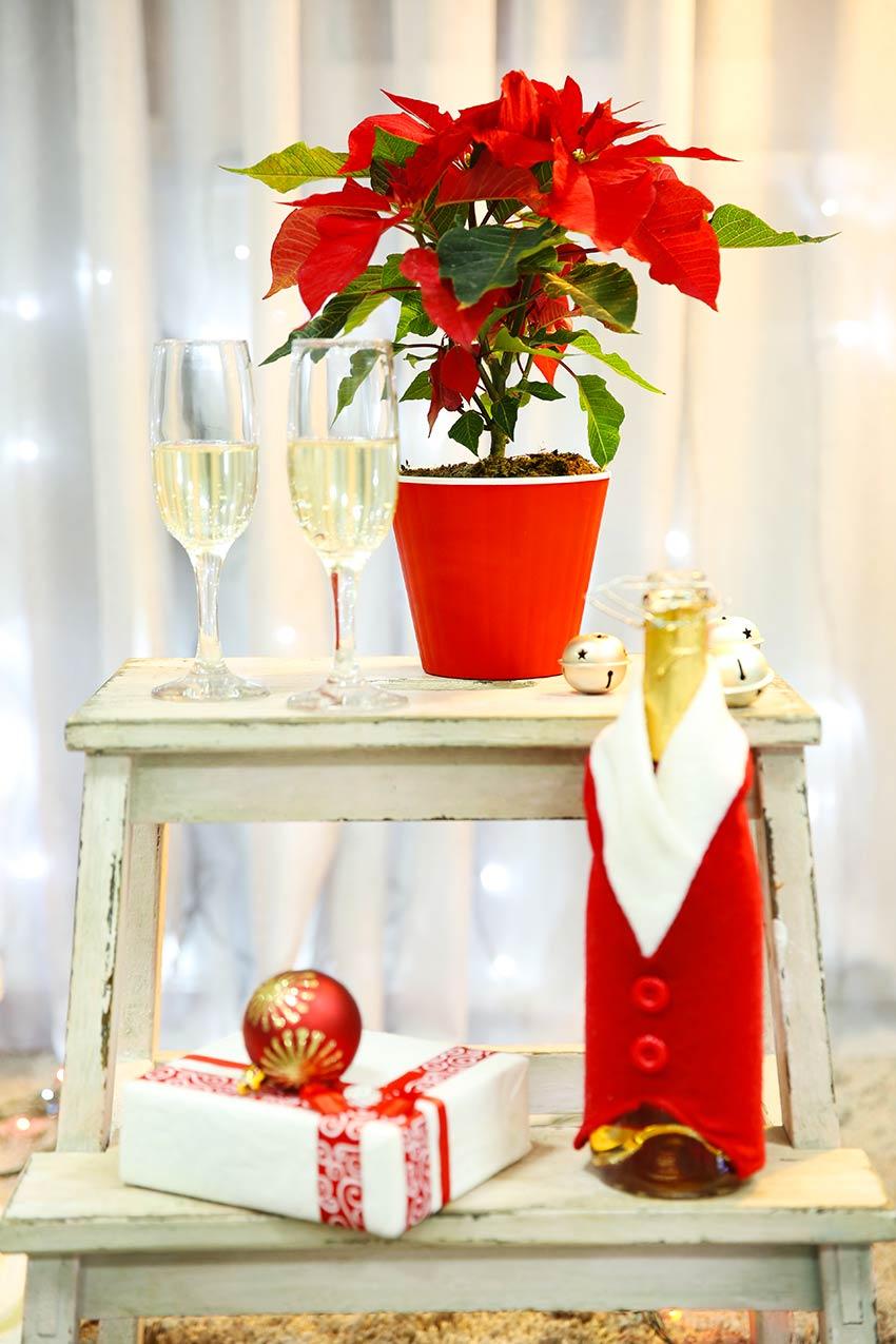 Stella di Natale in vaso poggiata su una scaletta stile shabby chic.