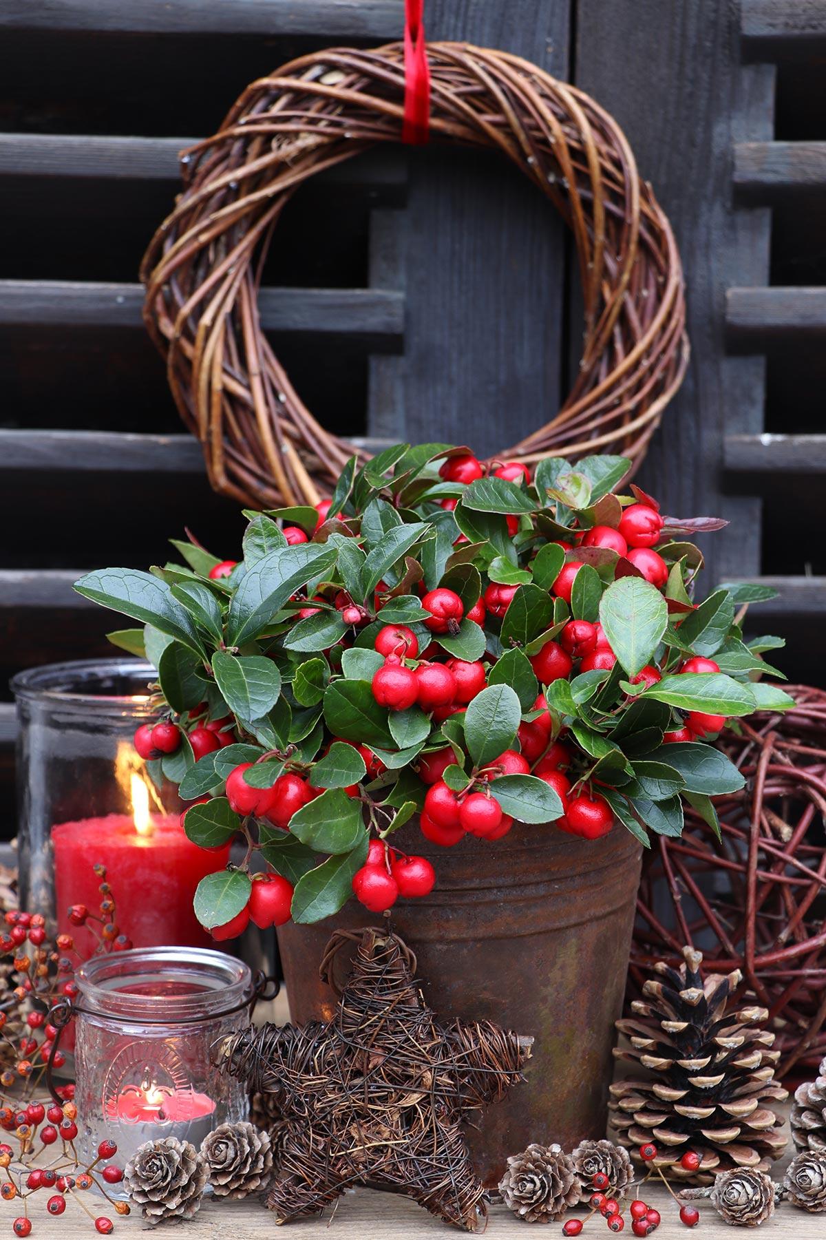 Decorazione natalizia esterna con vaso e bacche rosse.