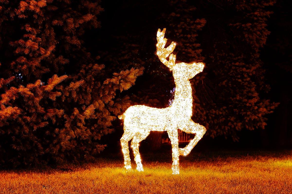 Renne natalizie illuminate in giardino.
