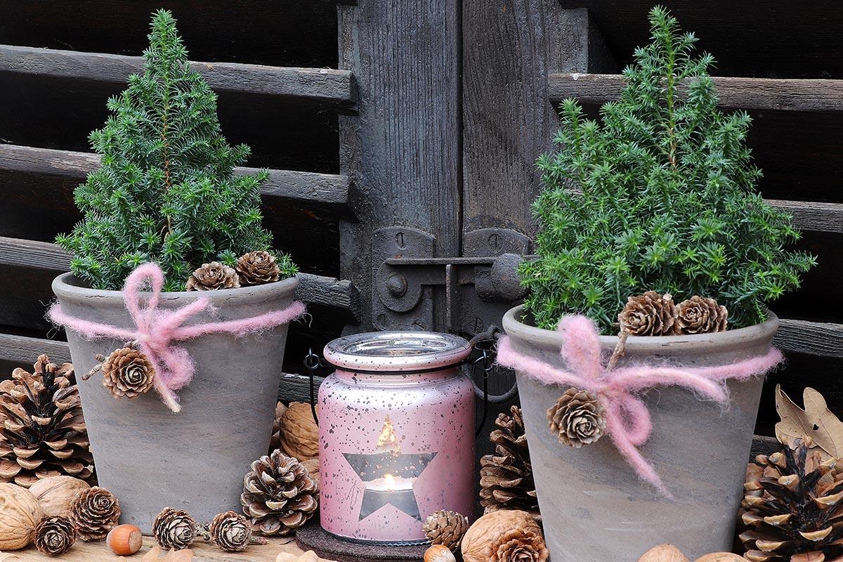 Vasetti da esterno con mini pini per decorare il Natale.