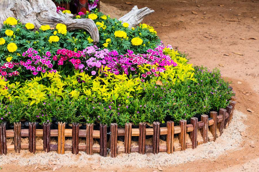 Aiuole fiorite sotto un albero con fiori gialli e viola.