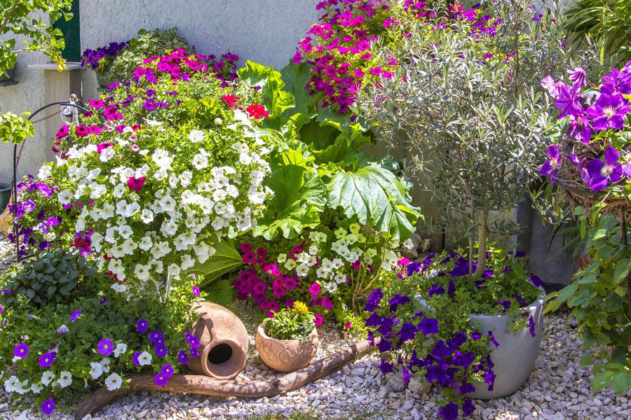 Splendida aiuola da giardino fiorita con pietre, anfora e alberello di uliva in un vaso.