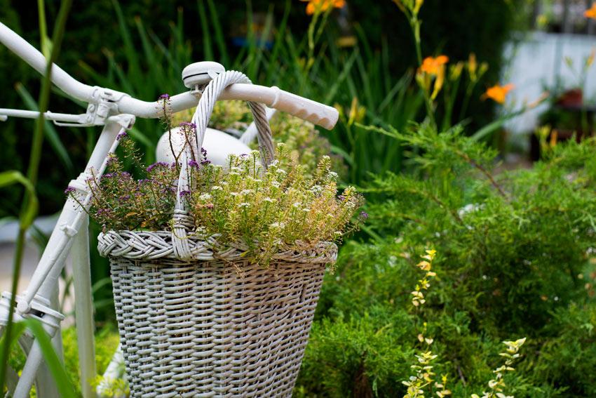 Cesto di fiori appesa ad una bicicletta per decorare in giardino.
