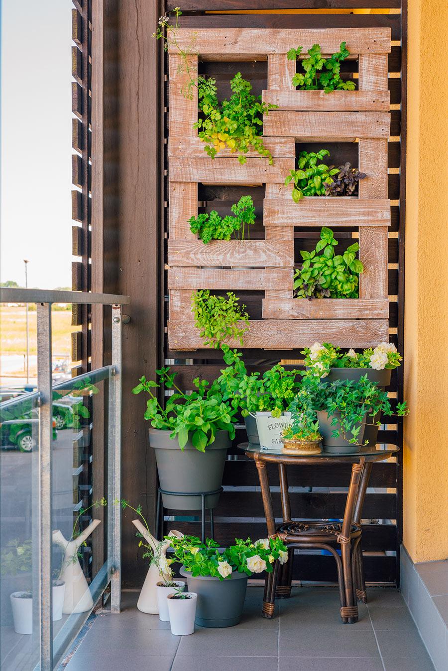 Giardino verticale sul balcone con piante aromatiche.