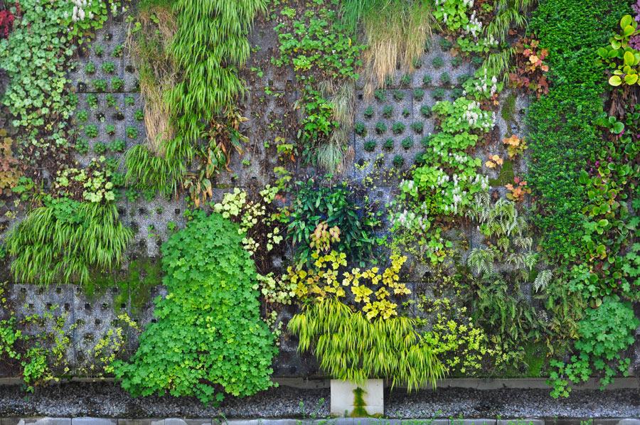 Bellissimo giardino verticale all'esterno.
