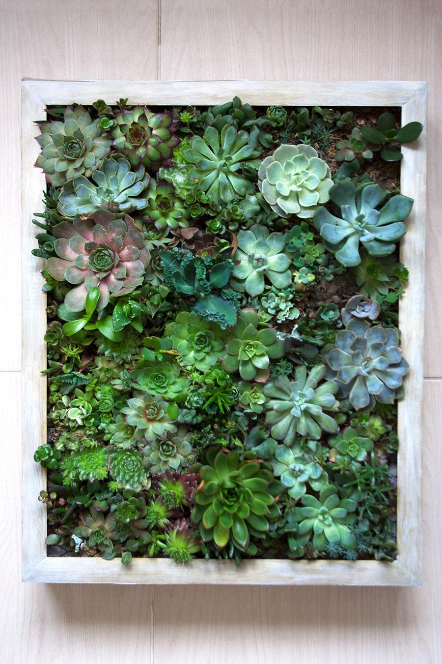 Piccolo giardino da parete con piantine grasse.