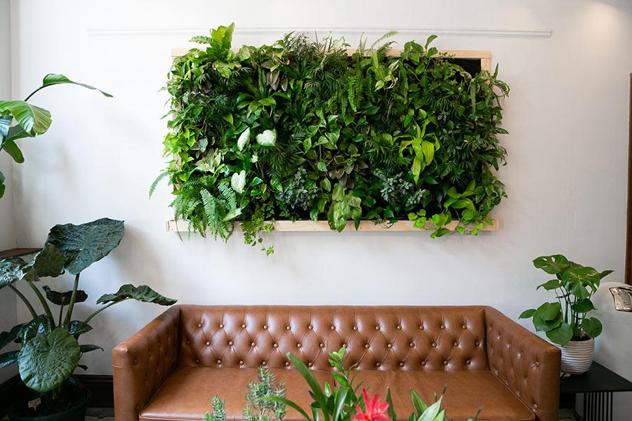 Quadro vegetale fai da te fissato al muro sopra il divano.