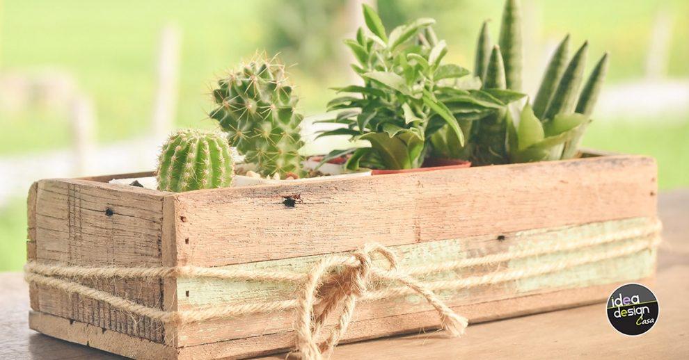idee per decorare casa con cactus.