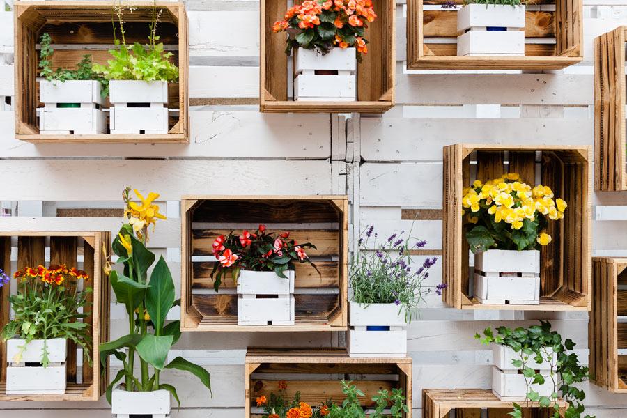 Cassette di legno con piantine fissate al muro in giardino, decorazioni primaverili.