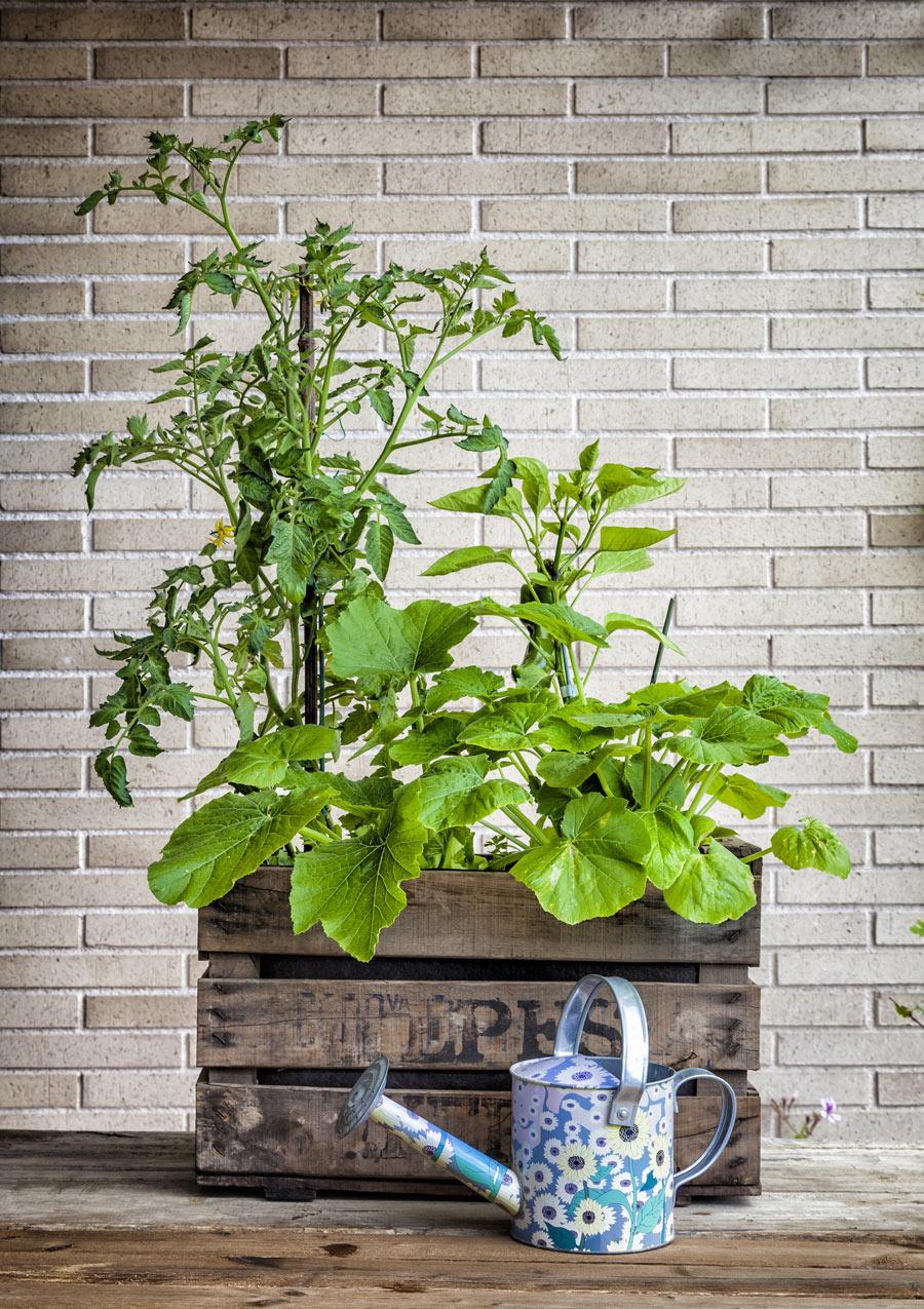 Cassa di legno vintage con pianta di basilico.