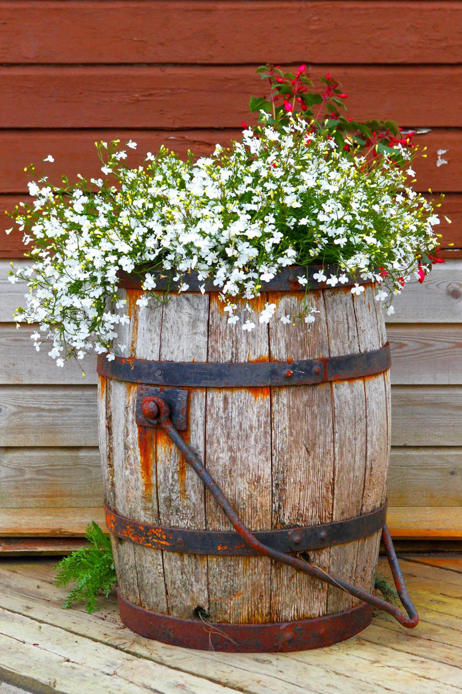 Vecchia botte decorata con fiori bianchi, una bella idea fai da te per il giardino.