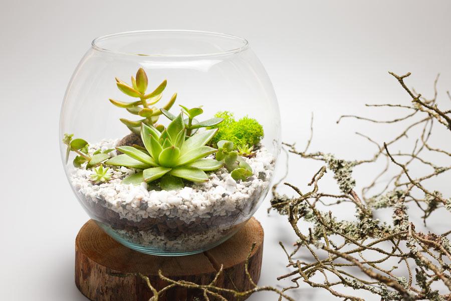 Vaso tondo in vetro con posizione di piantine grasse.