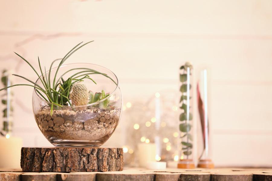 Terrario fai da te con piantine e piccolo cactus.