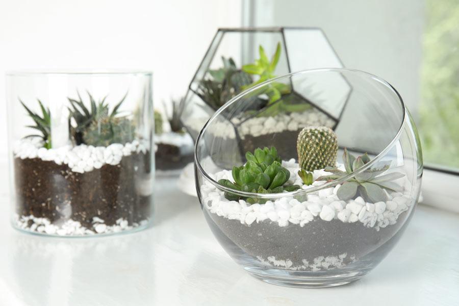 Contenitori in vetro con piantine, piante grasse e sassi bianchi.