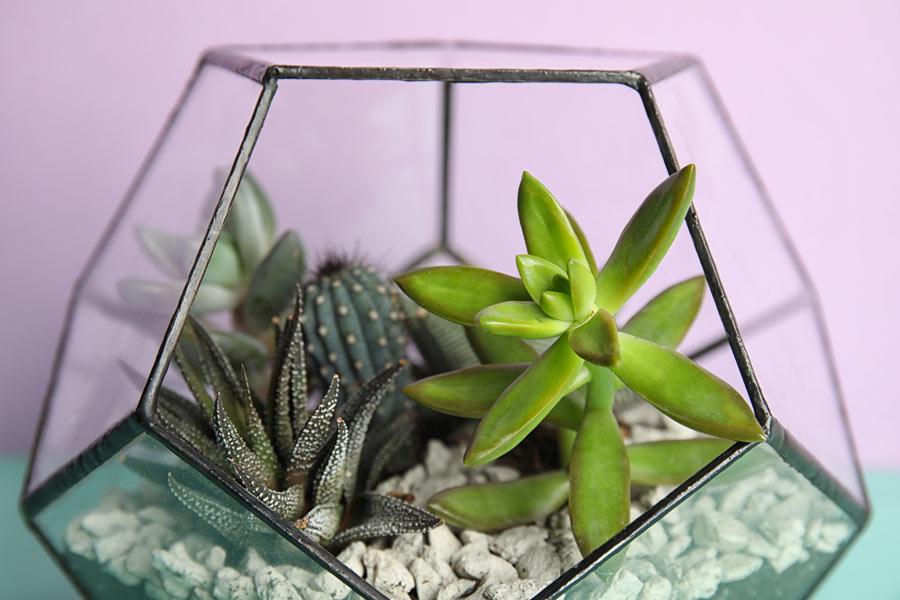 Terrario fai da te in vaso di vetro.