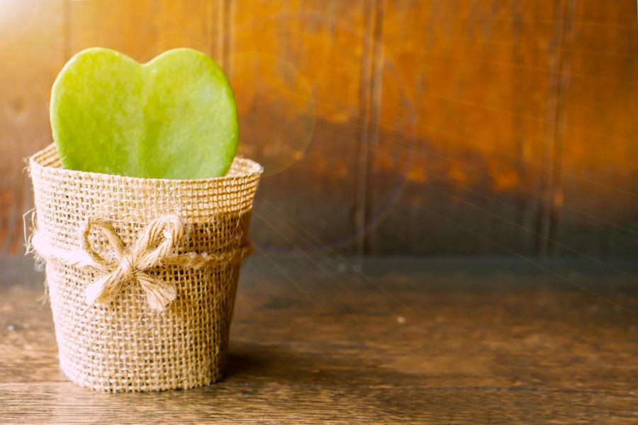 Bellissimo vasetto avvolto di juta con un cactus a forma di cuore, molto glamour.