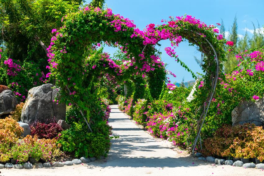 Bellissimo arco da giardino a forma di cuore con piante rampicanti e fiori fucsia.