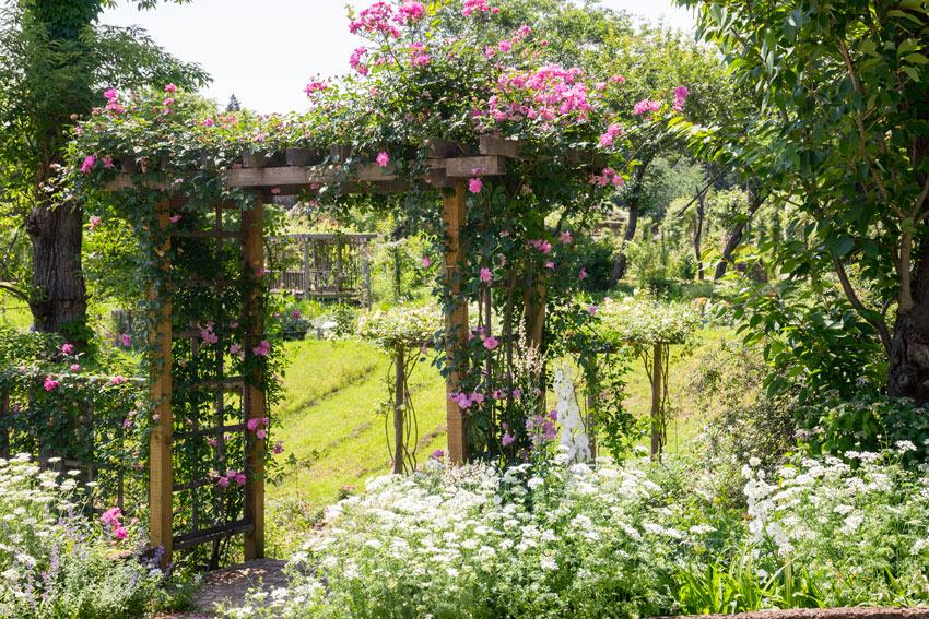 Giardino con arco di legno coperto di piante rampicanti con fori rosa.