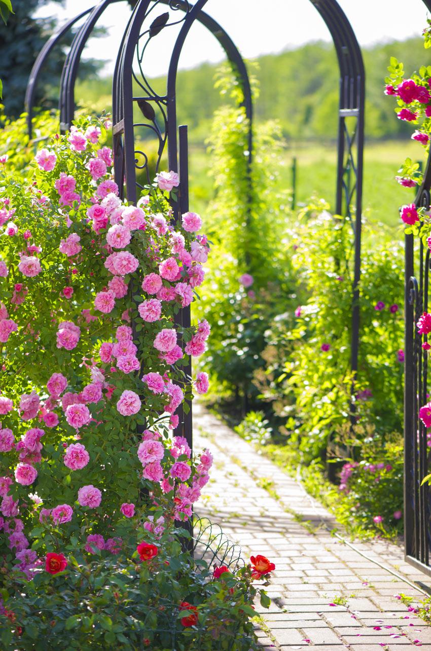Arco da giardino in ferro battuto con rose rose.