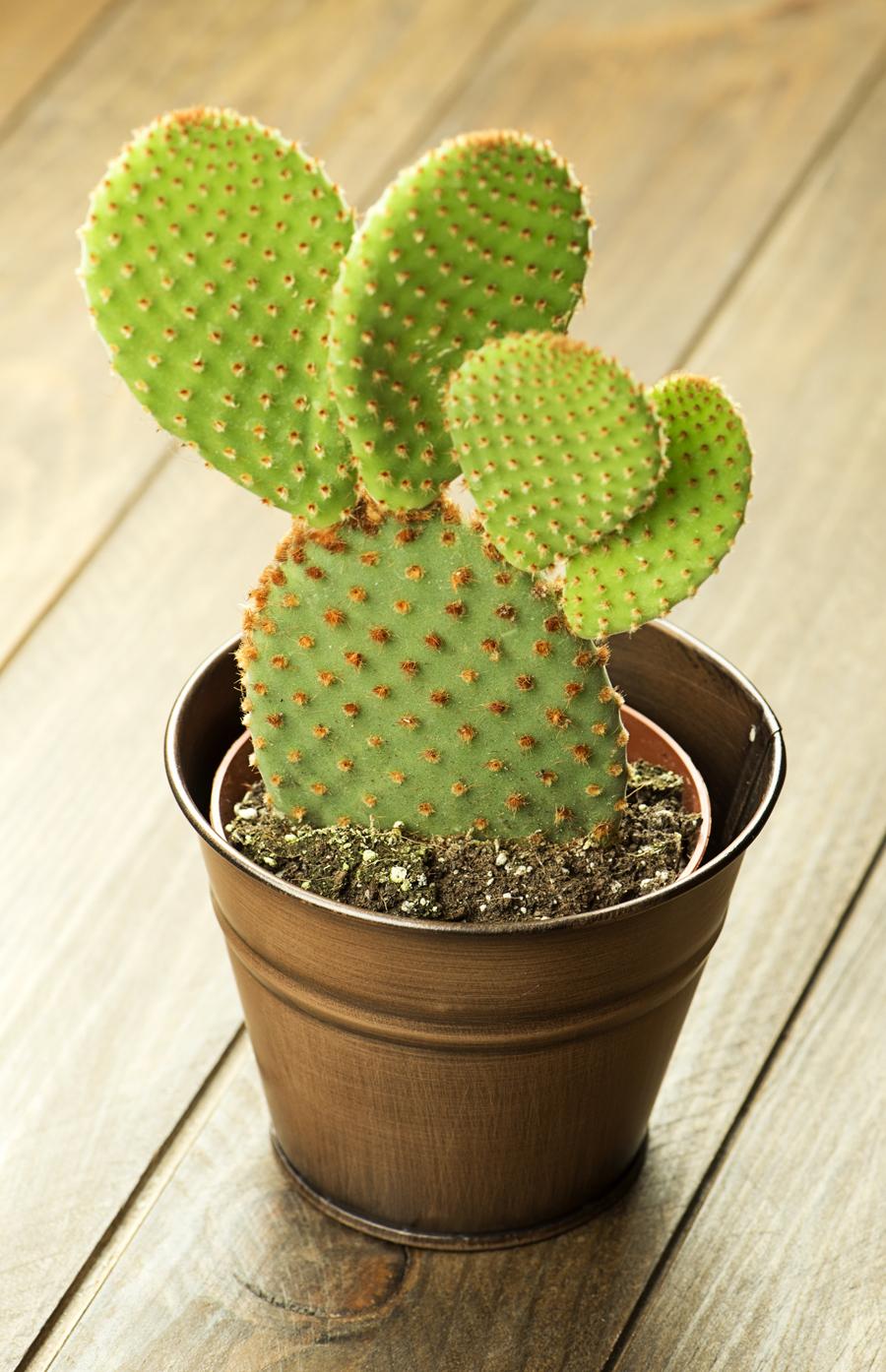 Bellissima pianta grassa in vaso.