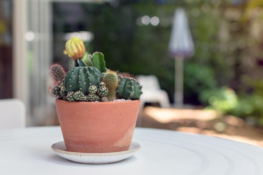 Composizione di cactus in un vaso di terracotta.