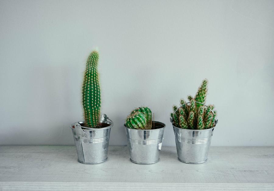 3 vasetti con piccoli cactus