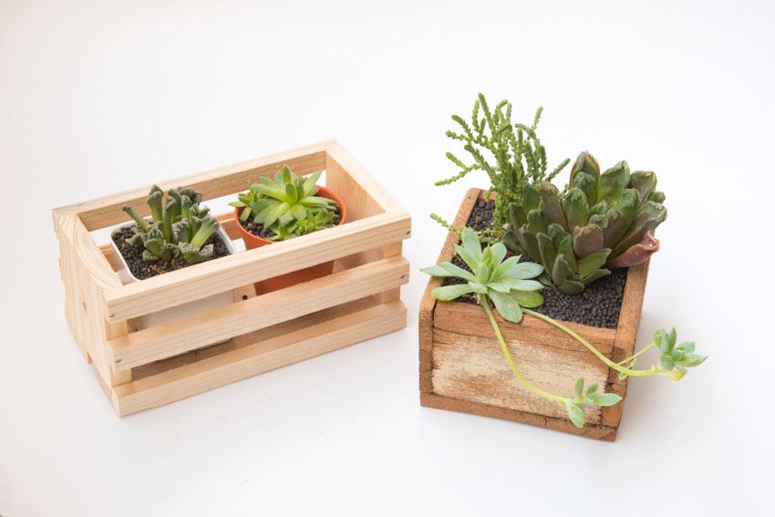 Cassette di legno con piante grasse.
