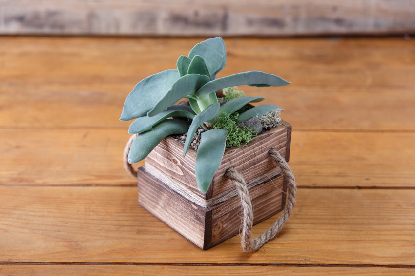 Cassetta di legno quadrata con una pianta grassa.