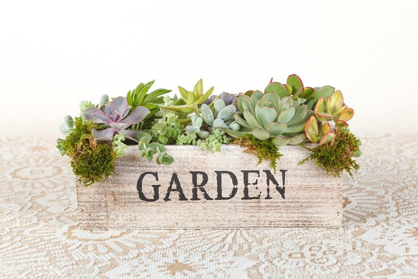 """cassetta di legno con scritta """"garden"""" piena di piantine grasse."""
