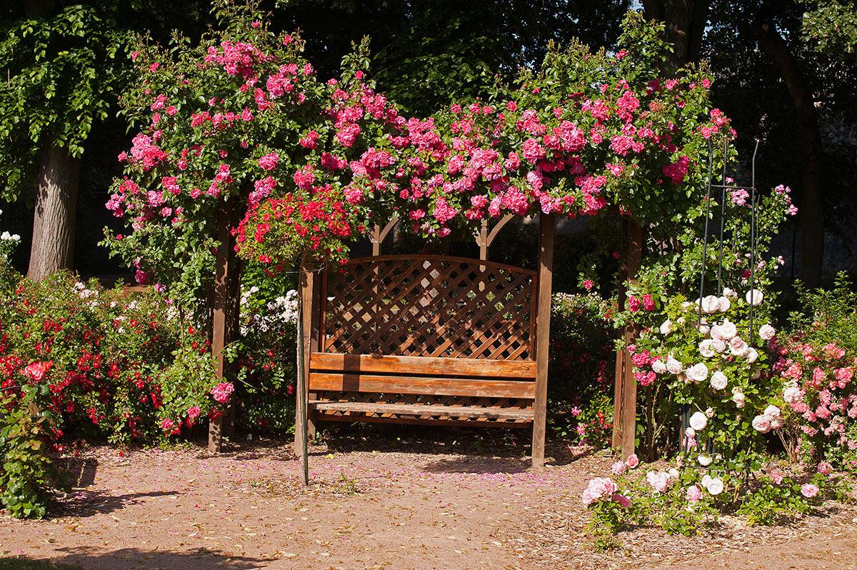 Panchina giardino sotto albero fiorito.