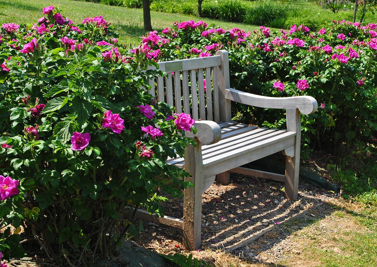 Panchina in giardino circondata di fiori.