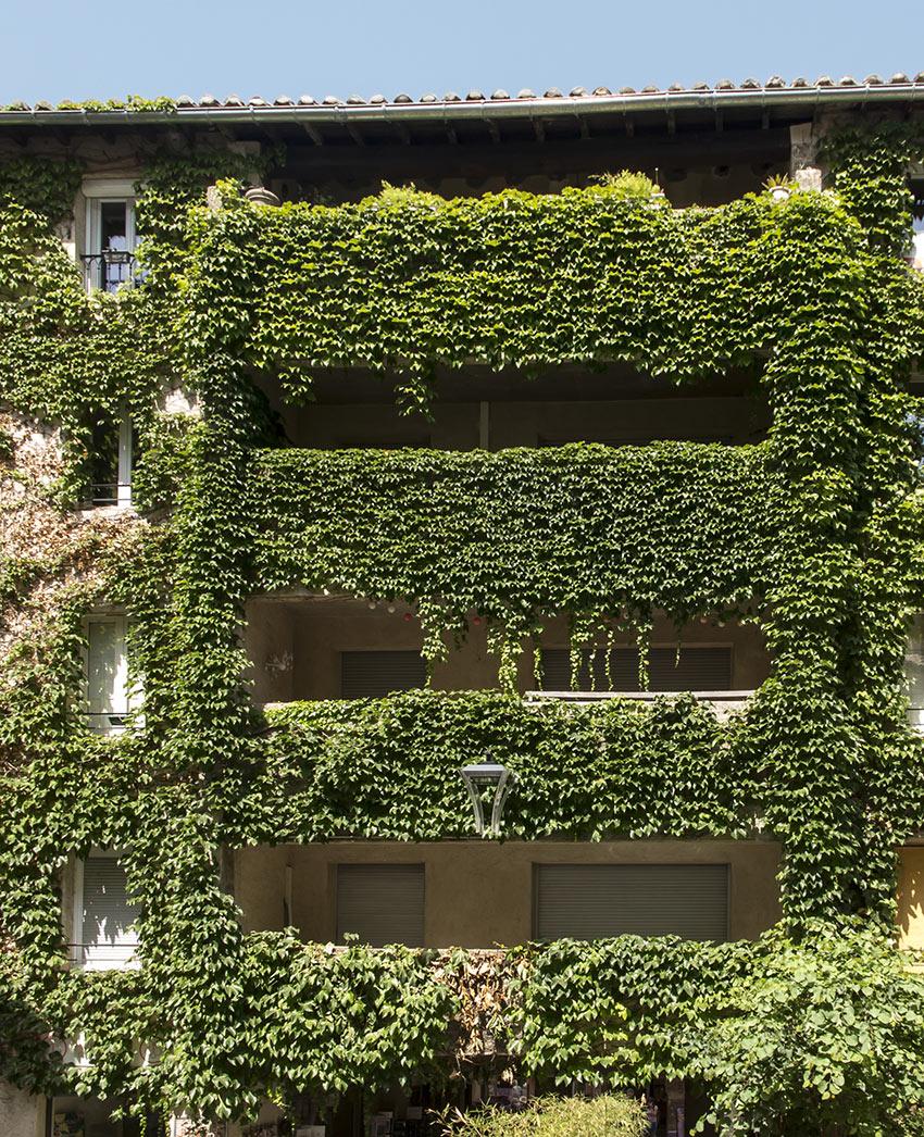 Casa ricoperta di edera rampicante.