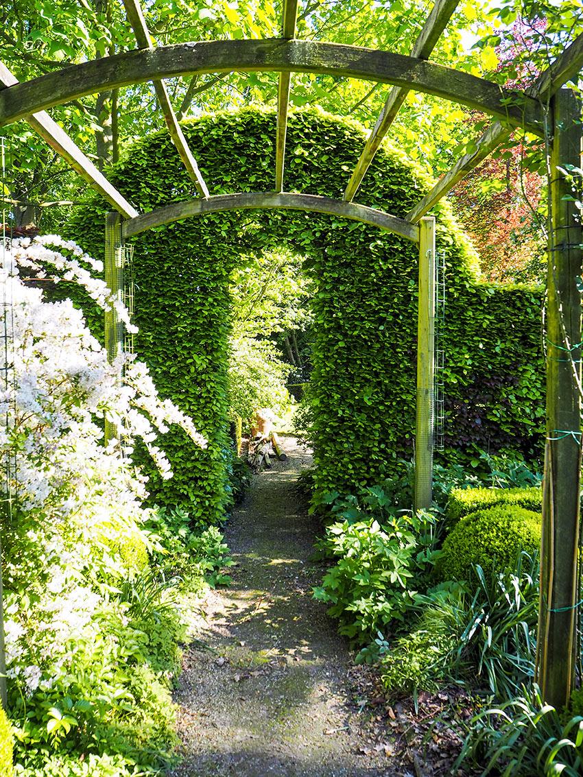 Arco da giardino con edera.