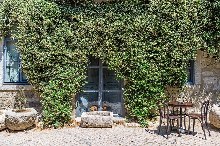 Facciata casa con piante rampicanti gelsomino.