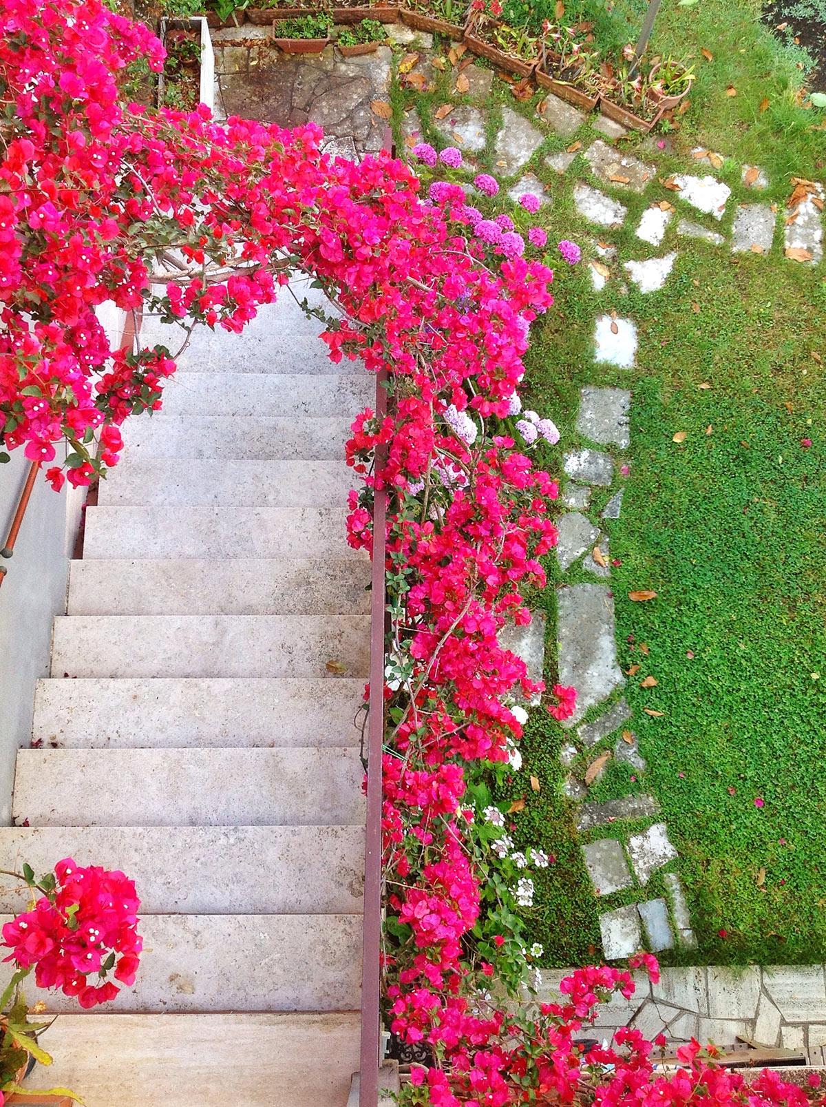 Arco di rose in giardino.